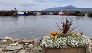 Carradale harbour.full